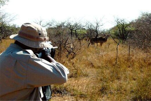 واکنش رئیس فراکسیون محیط زیست به شکارفروشی