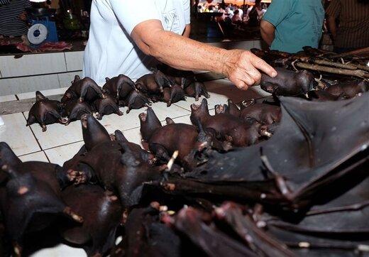 فروش روزانه خوراک خفاش و سگ در چین