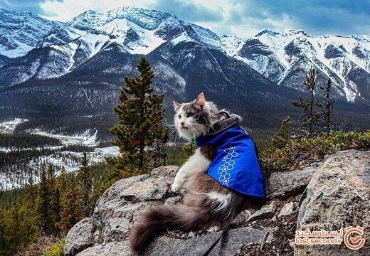 گری؛ عجیب ترین گربه گردشگر دنیا را بشناسید