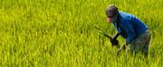 هشدار سازمان های جهانی در خصوص کمبود مواد غذایی