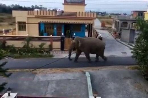 ببینید   صحنه شگفت انگیز برای هندیها در لحظه روبرویی با فیل!