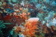موجودی دریایی که سرطان را نابود میکند