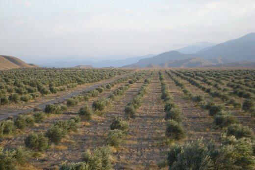 ۹۳۰ هکتار اراضی کشاورزی قزوین در طرح توسعه باغات