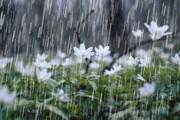 بارشها در کدام مناطق تا پایان هفته ادامه خواهد داشت؟