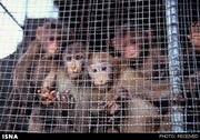 درخواست کارشناسان محیط زیست از WHO برای تعطیلی بازارهای فروش حیوانات زنده
