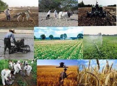 ایجاد 3800شغل جدید در بخش کشاورزی قزوین