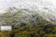 تصاویر | تابلوی زیبای برفی طبیعی از جنگلهای آمل!
