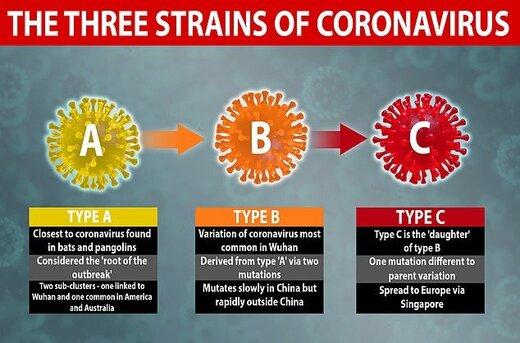 شناسایی ۳ گونه مختلف ویروس کرونا توسط محققان دانشگاه کمبریج