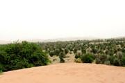ببینید | ساکنان بومی جنوب ایران با مالچ پاشی و کاشت درخت در زمین هایشان مخالفند؟