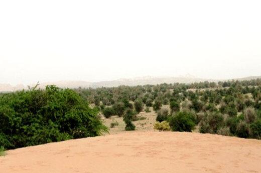 ببینید   ساکنان بومی جنوب ایران با مالچ پاشی و کاشت درخت در زمین هایشان مخالفند؟