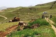 برخورد با توسعه باغات و حفر چاههای غیرمجاز در مراغه