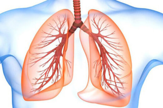 ببینید   تصاویر سه بعدی از تاثیر ویروس کرونا بر ریه های انسان