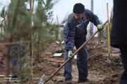 یکسوم از یکمیلیون نهال در اوایل اردیبهشت کاشت میشود/ ثبت شناسنامه درخت به نام شهروندان ویژه برنامه های گرامیداشت روز درختکاری سال ۹۷