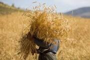 خرید گندم انبارشده کشاورزان گلستان آغاز شد