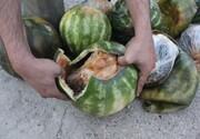 کشف ۱۷ کیلو تریاک از کامیون حامل بار هندوانه