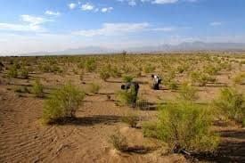 اقدامات بیولوژیکی بیابان زدایی در ۱۵۰هکتار از عرصه های بیابانی حوضه آبخیز دهنمک شهرستان آرادان
