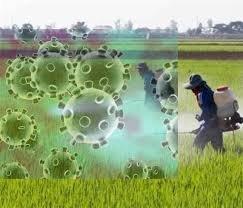 بررسی آثار اقتصادی شیوع ویروس کرونا بر بخش کشاورزی ایران