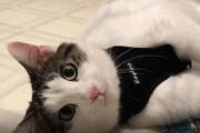 ببینید | نخستین ابتلای حیوانات به کووید19؛ این دو گربه در آمریکا کرونا گرفتند