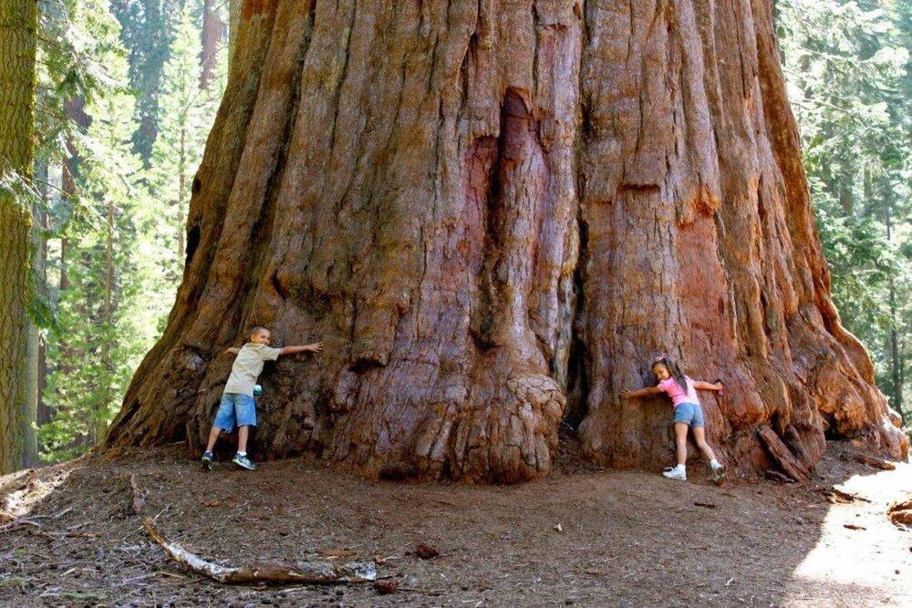 عجیب ترین درختان در کالیفرنیا