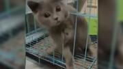 ببینید | اثباتی بر مایع بودن گربه!