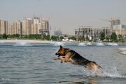 سگهای بدون صاحب تهران برای نگهبانی استعدادسنجی میشوند