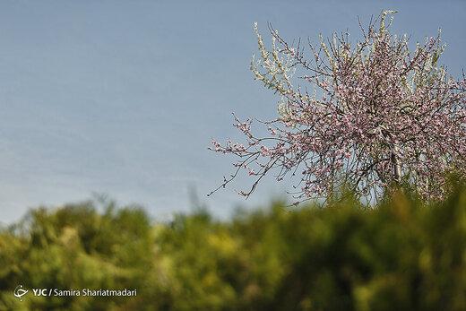 هوای تهران در ۱۲ اردیبهشت قابل قبول است
