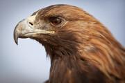 ببینید   اسلوموشن حیرت انگیز از لحظه پلک زدن عقاب