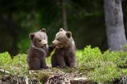 ببینید | نجات دو توله خرس از مرگ حتمی در شهرستان مرودشت استان فارس