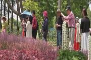 ببینید | زندگی عادی مردم شانگهای بعد از قرنطینه