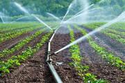 کدام محصولات کشاورزی ۱۰۰ در صد گران شدند؟