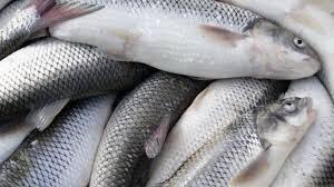 بیش از ۲ هزار تن ماهی در خراسان شمالی تولید شد