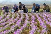 سهم ناچیز ایران از بازار گیاهان دارویی در دنیا / ۸۰۰۰ گونه گیاهی داریم