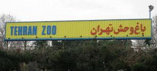 قرنطینه زاد و ولد حیوانات باغ وحش تهران را افزایش داد/ خبر گم شدن شامپانزه صحت ندارد