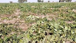 کرونا ۹۲ میلیارد و ۲۰۰ میلیون تومان به صنعت کشاورزی قم خسارت وارد کرد