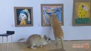 خلافیت عجیب یک زوج در قرنطینه و برپایی یک موزه هنر مینیاتوری! +تصاویر