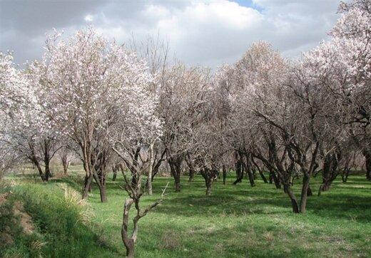 حفظ باغستان قزوین به عنوان تنها اثر تاریخ طبیعی کشور