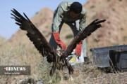 تصاویر | زیباترین پرندگان شکاری در آسمان قم رها شدند