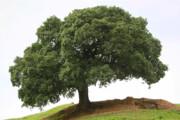 عکس | ماجرای تلخ تک درخت تنهای روستای تفریحی اطراف شهر ایذه
