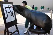 ببینید | شیر دریایی نقاش در آکواریوم یوکوهاما !