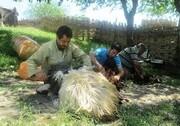 تولید ۲ هزار تن پشم در گلستان