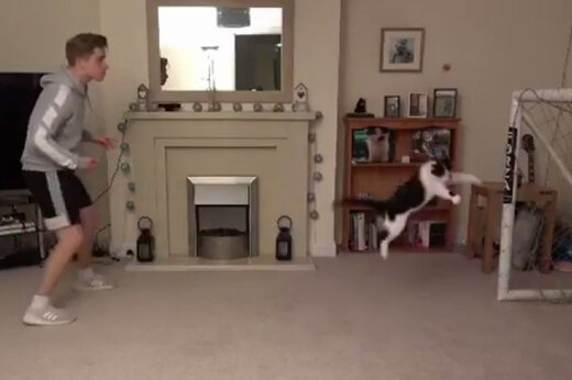 ببینید | دروازه بانی گربه خانگی !