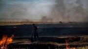 عامل به آتش کشیدن گندمزارها در سوریه مشخص شد؛ دستور ترامپ است!