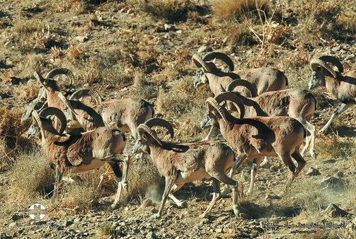 ۴۰۸ گونه جانوری در چهارمحال و بختیاری شناسایی شده است