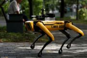 ببینید | ربات سگ گله با قابلیت هشدار رعایت فاصله اجتماعی!