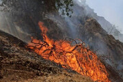 ببینید | آتشی که همچنان جنگلهای گچساران را می سوزاند