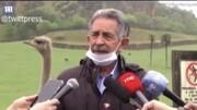 ببینید | کنجکاوی شترمرغ پشت سر سیاستمدار اسپانیایی سوژه رسانهها شد