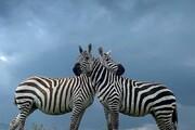 تصاویر دیدنی و متفاوت از حیات وحش در آفریقا