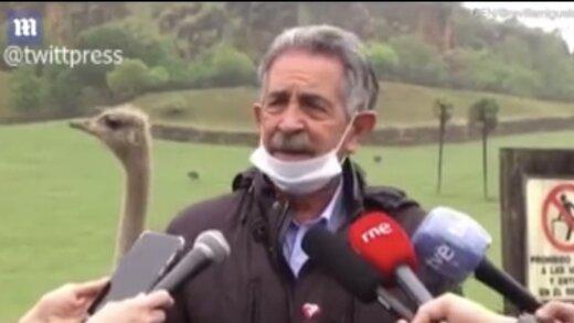 ببینید   کنجکاوی شترمرغ پشت سر سیاستمدار اسپانیایی سوژه رسانهها شد