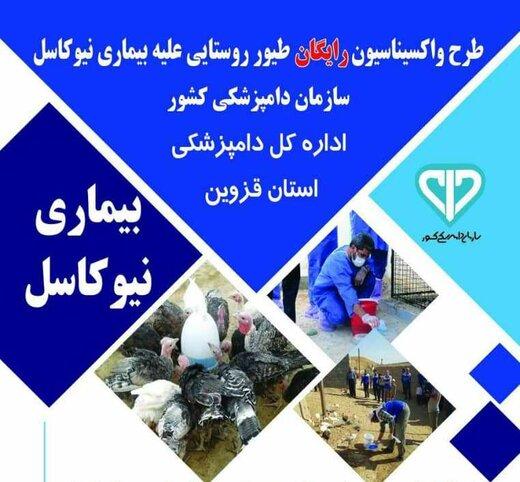 واکسیناسیون رایگان پرندگان در آبیک