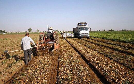 مدیر زراعت همدان: امسال بیش از ۹۰۰ هزار تن سیب زمینی در استان همدان برداشت می شود